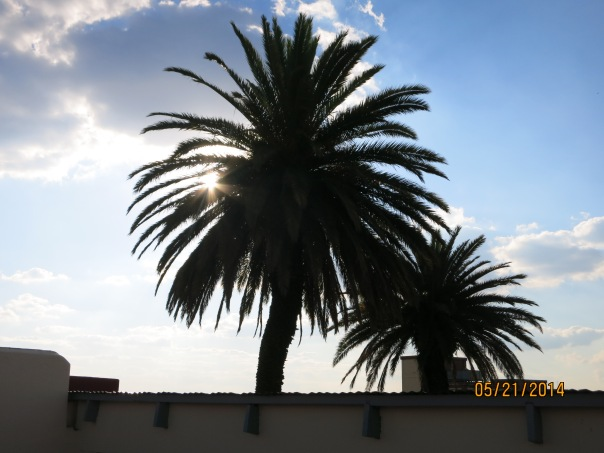 Trees which resemble the South African Tree of justice symbol behind the old apartheid prisons at the South African Supreme Court site